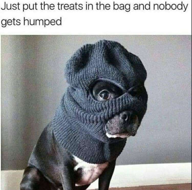 Wenn dein Hund kriminell wird!